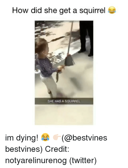 Memes, Twitter, and Squirrel: How did she get a squirrel  SHE HAS A SQUIRREL im dying! 😂 👉🏻(@bestvines bestvines) Credit: notyarelinurenog (twitter)