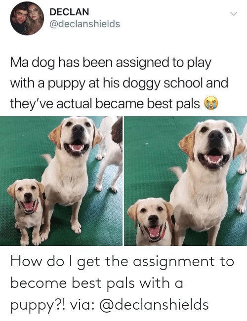 pals: How do I get the assignment to become best pals with a puppy?! via: @declanshields
