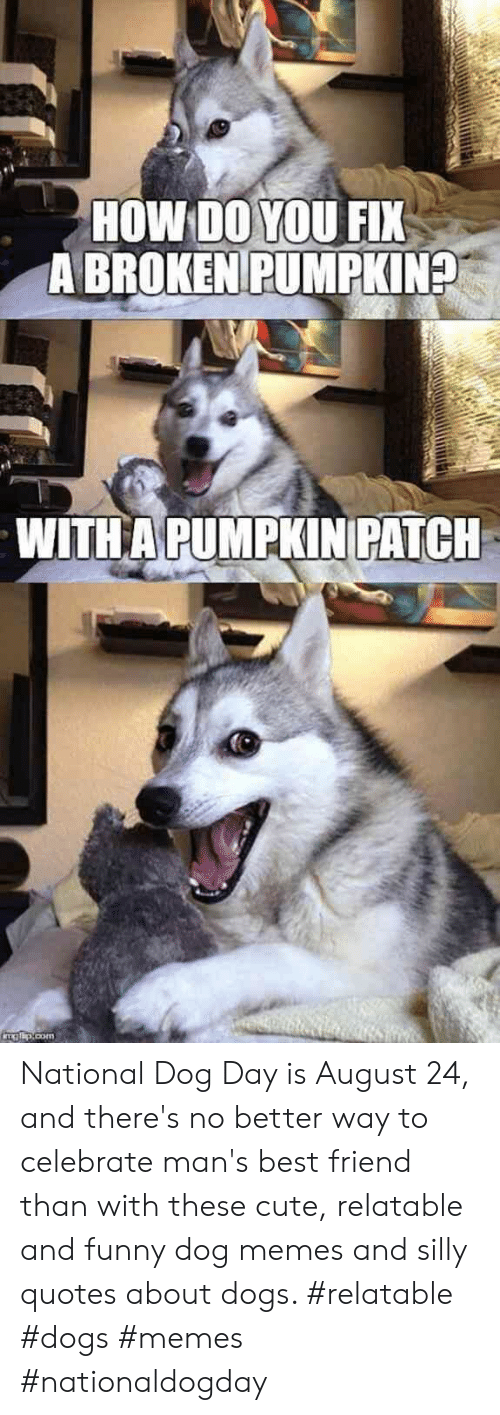 Silly Quotes: HOW DO YOU FIX  A BROKEN PUMPKIN?  WITHA PUMPKINPATCH  ITAE.com National Dog Day is August 24, and there's no better way to celebrate man's best friend than with these cute, relatable and funny dog memes and silly quotes about dogs.  #relatable #dogs #memes #nationaldogday