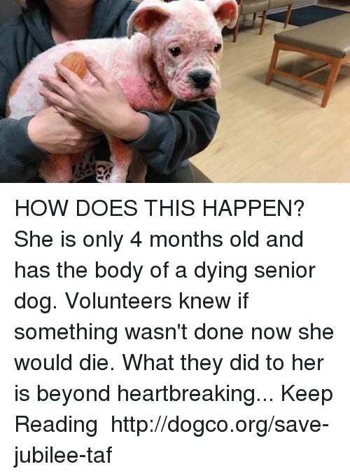 jubilee: HOW DOES THIS HAPPEN? She is only 4 months old and has the body of a dying senior dog. Volunteers knew if something wasn't done now she would die. What they did to her is beyond heartbreaking...  Keep Reading ❥ http://dogco.org/save-jubilee-taf