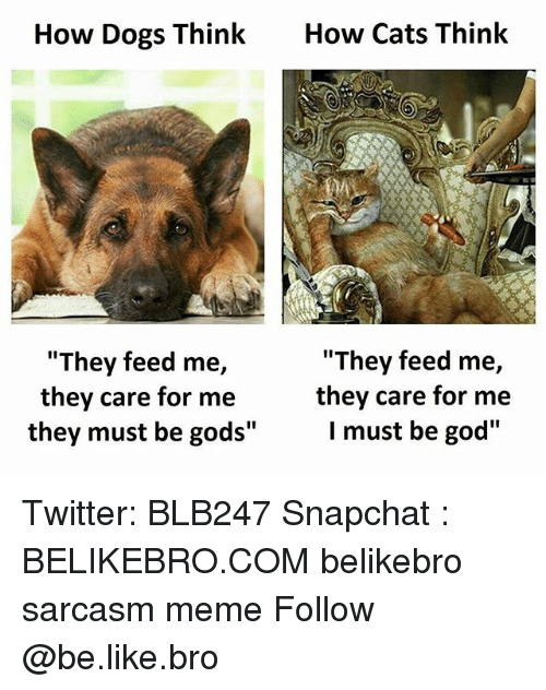 "Be Like, Cats, and Dogs: How Dogs Think  How Cats Think  ""They feed me,  ""They feed me,  they care for me  they care for me  I must be god""  they must be gods"" Twitter: BLB247 Snapchat : BELIKEBRO.COM belikebro sarcasm meme Follow @be.like.bro"