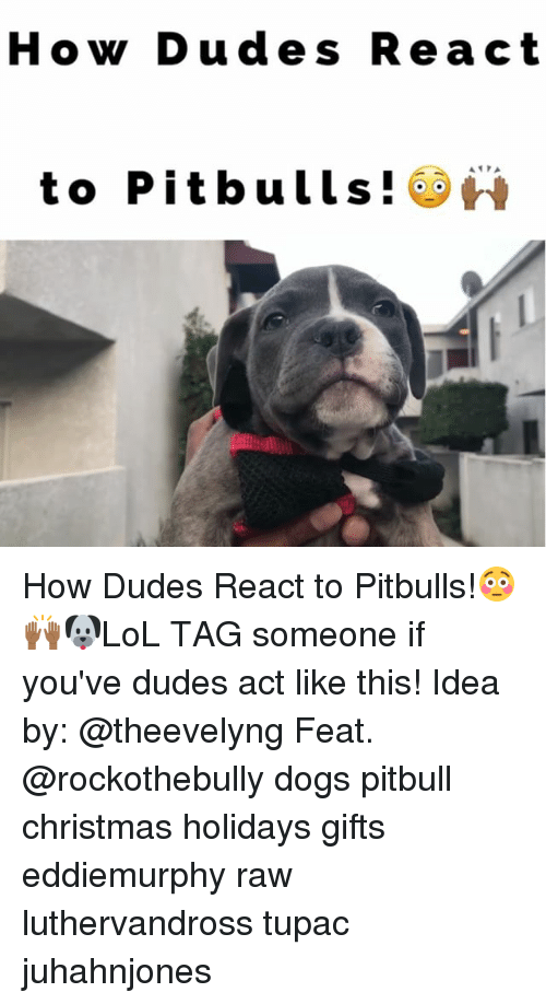 Memes, Pitbull, and Tupac: How Dude s Re act  to Pitbulls! How Dudes React to Pitbulls!😳🙌🏾🐶LoL TAG someone if you've dudes act like this! Idea by: @theevelyng Feat. @rockothebully dogs pitbull christmas holidays gifts eddiemurphy raw luthervandross tupac juhahnjones