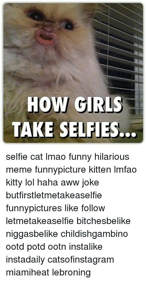 Aww, Cats, and Funny: HOW GIRLS  TAKE SELFIES. selfie cat lmao funny hilarious meme funnypicture kitten lmfao kitty lol haha aww joke butfirstletmetakeaselfie funnypictures like follow letmetakeaselfie bitchesbelike niggasbelike childishgambino ootd potd ootn instalike instadaily catsofinstagram miamiheat lebroning