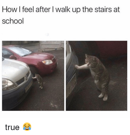 Memes, School, and True: How I feel after l walk up the stairs at  school true 😂