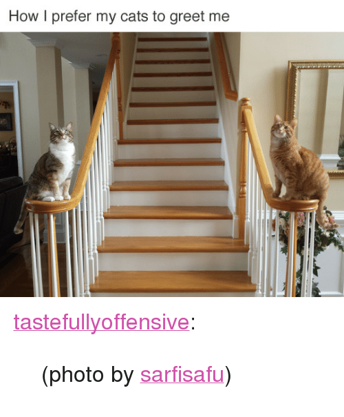 """reddit: How I prefer my cats to greet me <p><a class=""""tumblr_blog"""" href=""""http://tastefullyoffensive.tumblr.com/post/140401068238"""" target=""""_blank"""">tastefullyoffensive</a>:</p> <blockquote> <p>(photo by<a href=""""https://www.reddit.com/user/sarfisafu"""" target=""""_blank"""">sarfisafu</a>)</p> </blockquote>"""