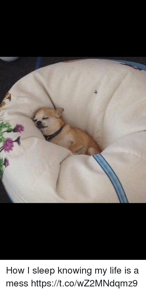Life, Girl Memes, and Sleep: How I sleep knowing my life is a mess https://t.co/wZ2MNdqmz9