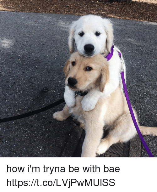Bae, Girl Memes, and How: how i'm tryna be with bae https://t.co/LVjPwMUlSS