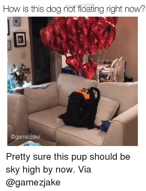 Memes, Pup, and 🤖: How is this dog not floating right now  @gamezjake Pretty sure this pup should be sky high by now. Via @gamezjake