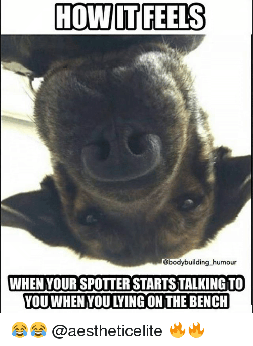 Gym, Bodybuilding, and Lying: HOW IT FEELS  @bodybuilding humour  WHEN YOUR SPOTTER STARTSTALKING TO  YOU WHEN YOU LYING ON THE BENCH 😂😂 @aestheticelite 🔥🔥