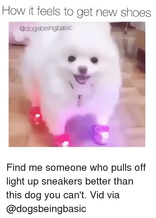 Memes, 🤖, and Dog: How it feels to get new shoes  @dogsbeingbasic Find me someone who pulls off light up sneakers better than this dog you can't. Vid via @dogsbeingbasic