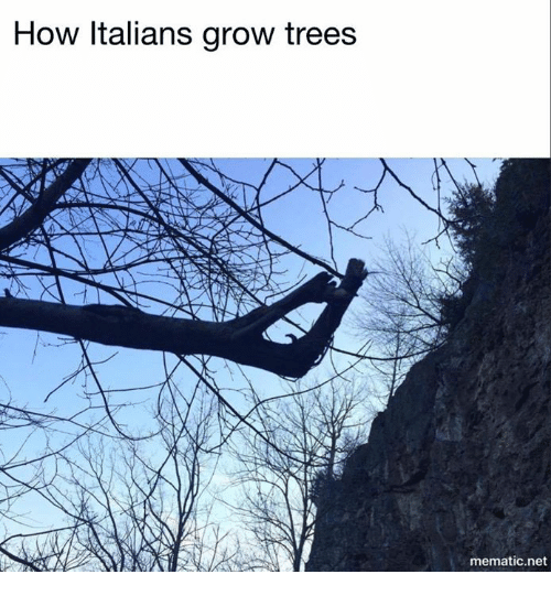 Trees, How, and Net: How Italians grow trees  mematic net