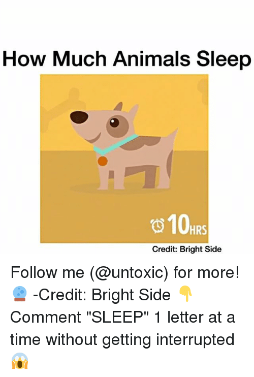 """Memes, 🤖, and Letters: How Much Animals Sleep  HRS  Credit: Bright Side Follow me (@untoxic) for more! 🔮 -Credit: Bright Side 👇Comment """"SLEEP"""" 1 letter at a time without getting interrupted 😱"""