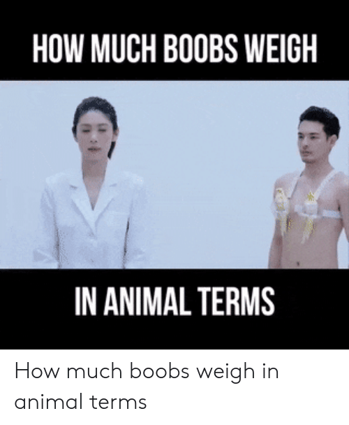 weigh: HOW MUCH BOOBS WEIGH  IN ANIMAL TERMS How much boobs weigh in animal terms
