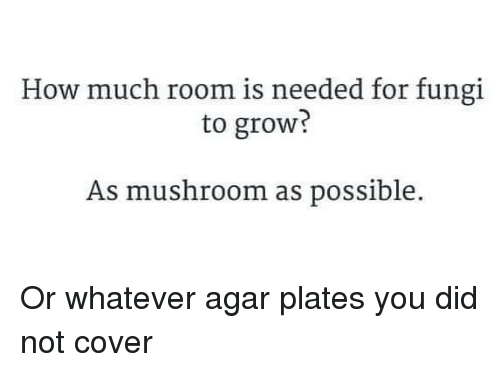 Memes, 🤖, and How: How much room is needed for fungi  to grow  As mushroom as possible. Or whatever agar plates you did not cover