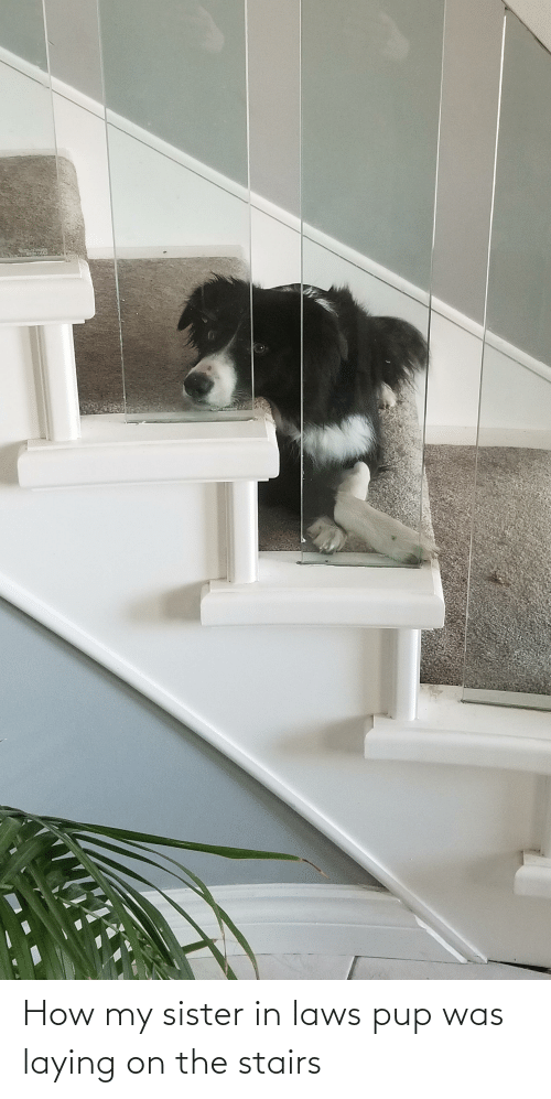 in laws: How my sister in laws pup was laying on the stairs