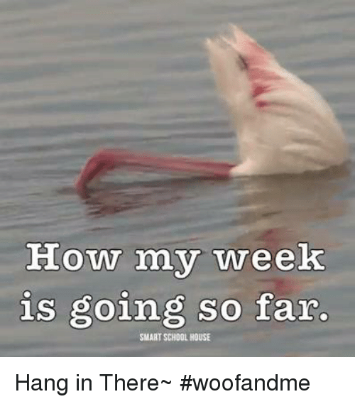 Hanging In There: How my week  is going so far.  SMART SCHOOL HOUSE Hang in There~ #woofandme