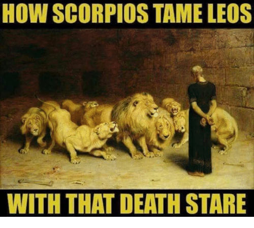 Death Stare: HOW SCORPIOS TAME LEOS  WITH THAT DEATH STARE