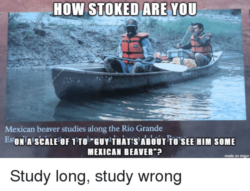 """beaver: HOW STOKED ARE YOU  Mexican beaver studies along the Rio Grande  EsONiA SCALEOF 1TTOi GUY THATABOUT TOSEE HIM SOME  MEXICAN BEAVER""""  made on imgur Study long, study wrong"""