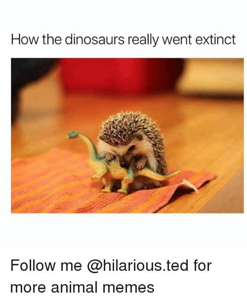 Funny, Memes, and Ted: How the dinosaurs really went extinct Follow me @hilarious.ted for more animal memes