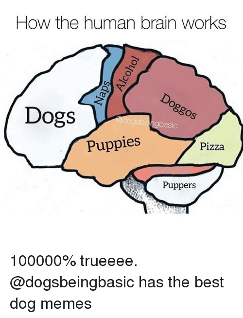 Best Dog: How the human brain works  Dogs  basic  Puppies  Pizza  Puppers 100000% trueeee. @dogsbeingbasic has the best dog memes