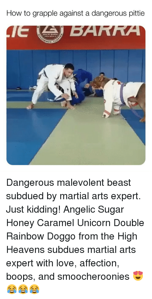Angelic: How to grapple against a dangerous pittie Dangerous malevolent beast subdued by martial arts expert. Just kidding! Angelic Sugar Honey Caramel Unicorn Double Rainbow Doggo from the High Heavens subdues martial arts expert with love, affection, boops, and smoocheroonies 😍😂😂😂