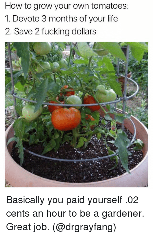 devote: How to grow your own tomatoes:  1. Devote 3 months of your life  2. Save 2 fucking dollars Basically you paid yourself .02 cents an hour to be a gardener. Great job. (@drgrayfang)