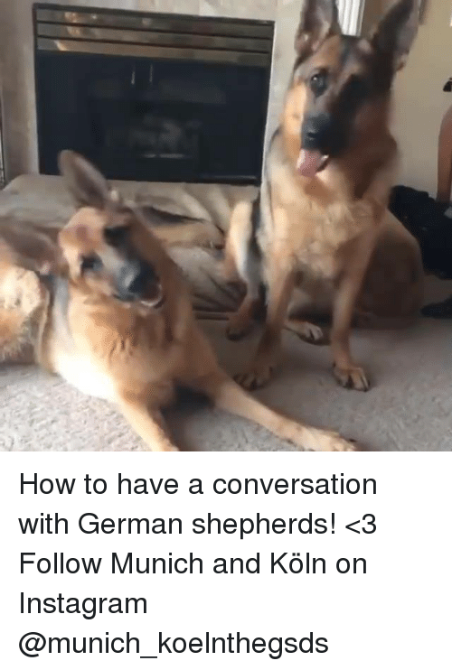 Germanic: How to have a conversation with German shepherds! <3  Follow Munich and Köln on Instagram @munich_koelnthegsds