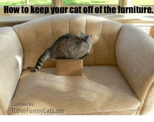 How To Keep Your Cat Off Ofthe Furniture Captions By Ilove Funny Cats Me Cats Meme On Sizzle