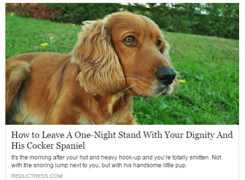 The Morning After: How to Leave A One-Night Stand With Your Dignity And  His Cocker Spaniel  It's the morning after your hot and heavy hook-up and you're totally smitten. Not  with the snoring lump next to you, but with his handsome little pup.  REDUCTRESS.COM