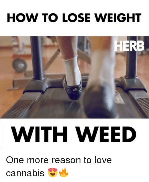 how to lose weight: HOW TO LOSE WEIGHT  HERB  WITH WEED One more reason to love cannabis 😍🔥