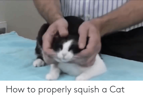 a cat: How to properly squish a Cat