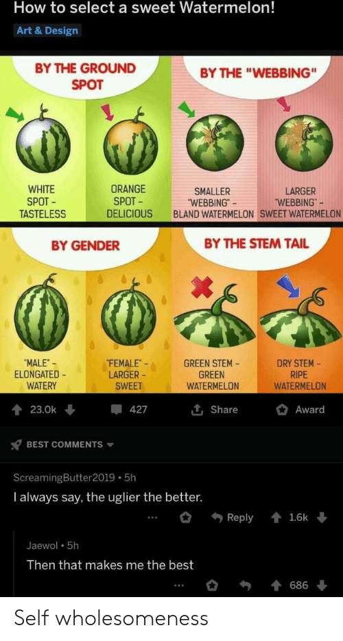 "That Makes Me: How to select a sweet Watermelon!  Art & Design  BY THE GROUND  BY THE ""WEBBING""  SPOT  WHITE  SPOT  TASTELESS  ORANGE  SPOT  LARGER  ""WEBBING""  SMALLER  ""WEBBING""  BLAND WATERMELON SWEET WATERMELON  DELICIOUS  BY THE STEM TAIL  BY GENDER  FEMALE  LARGER  DRY STEM-  RIPE  WATERMELON  ""MALE-  ELONGATED  WATERY  GREEN STEM  GREEN  WATERMELON  SWEET  Award  23.0k  427  Share  BEST COMMENTS  ScreamingButter 2019 5h  I always say, the uglier the better.  Reply  1.6k  Jaewol 5h  Then that makes me the best  686 Self wholesomeness"
