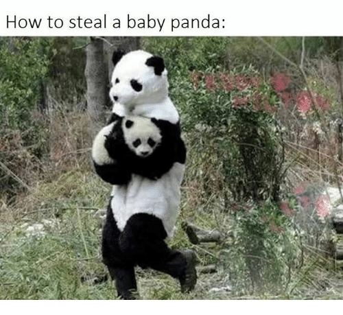 Memes, Panda, and Baby Panda: How to steal a baby panda: