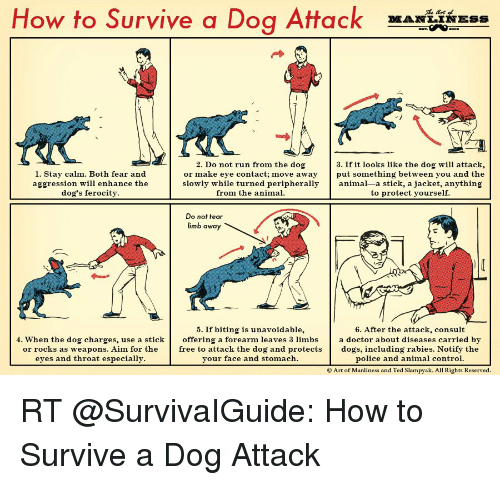 animated dog: How to Survive a Dog Attack  3. If it looks like the dog will attack,  2. Do not run from the dog  1. Stay calm. Both fear and  or make eye contact: move away  put something between you and the  slowly while turned peripherally  animal-a stick, a jacket, anything  aggression will enhance the  from the animal.  dog's ferocity  to protect yourself.  Do not tear  limb.  away  5. If biting is unavoidable  6. After the attack,  consult  4. When the dog charges, use a stick  offering a forearm leaves 3 limbs  a doctor about diseases carried by  or rocks as weapons. Aim for the  free to attack the dog and protects  dogs, including rabies. Notify the  eyes and throat especially.  your face and stomach.  police and animal control.  Art of Manliness and Ted Slampyak. All Rights Reserved. RT @SurvivaIGuide: How to Survive a Dog Attack