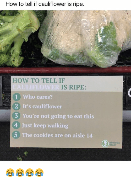 Cookies, How To, and Girl Memes: How to tell if cauliflower is ripe.  HOW TO TELL IF  IS RIPE:  1 Who cares?  2 It's cauliflower  3 You're not going to eat this  4 Just keep walking  5 The cookies are on aisle 14  obvious  plant 😂😂😂😂