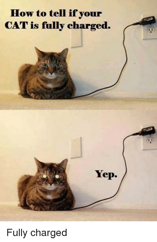 how-to-tell-ifyour-cat-is-fully-charged-yep-fully-2735355.png
