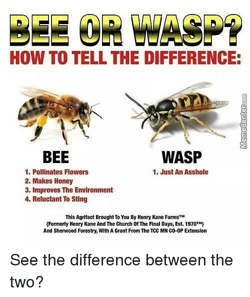 What's the difference between bees, wasps, and hornets ...  |Warrior Wasp Meme
