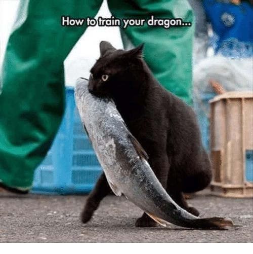 how to train your dragons: How to train your dragon