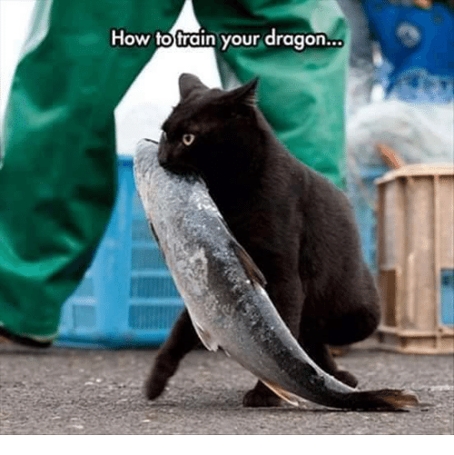 Grumpy Cat, How To, and Train: How to train your dragon..a