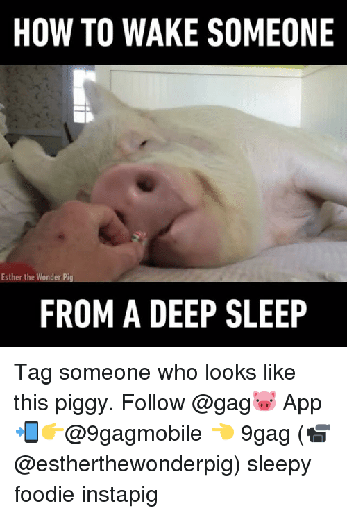Memes, 🤖, and Pig: HOW TO WAKE SOMEONE  Esther the Wonder Pig  FROM A DEEP SLEEP Tag someone who looks like this piggy. Follow @gag🐷 App📲👉@9gagmobile 👈 9gag (📹 @estherthewonderpig) sleepy foodie instapig
