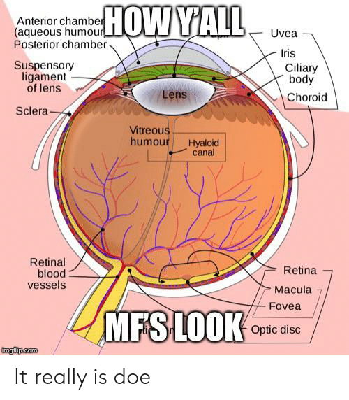 ligament: HOW YALL  Anterior chamber  (aqueous humour  Posterior chamber  Uvea  Iris  Suspensory  ligament  of lens  Ciliary  body  Lens  Choroid  Sclera  Vitreous  humour  Hyaloid  canal  Retinal  blood  vessels  Retina  Macula  Fovea  MFSLOOK  Optic disc  imgiip.com It really is doe