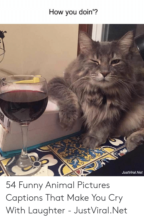 Doin: How you doin'?  JustViral.Net  tartanayE 54 Funny Animal Pictures Captions That Make You Cry With Laughter - JustViral.Net