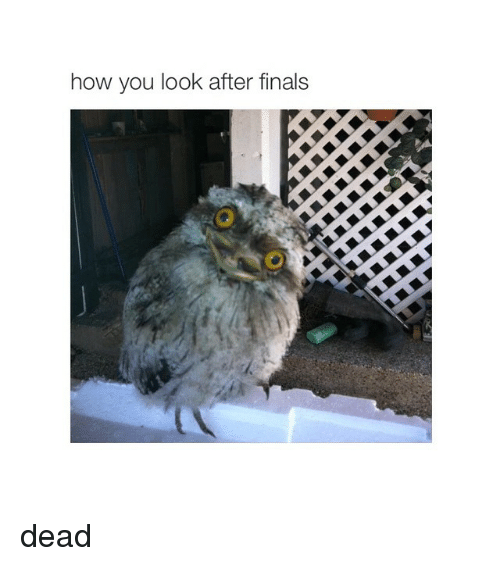 Girl Memes: how you look after finals dead