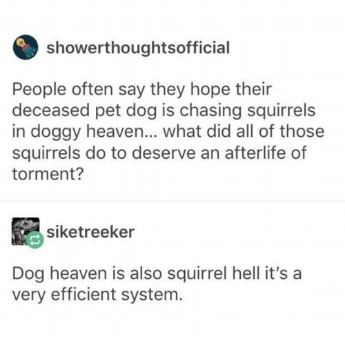 Dank, Heaven, and Squirrel: howerthoughtsoffici  People often say they hope their  deceased pet dog is chasing squirrels  in doggy heaven... what did all of those  squirrels do to deserve an afterlife of  torment?  siketreeker  Dog heaven is also squirrel hell it's a  very efficient system.
