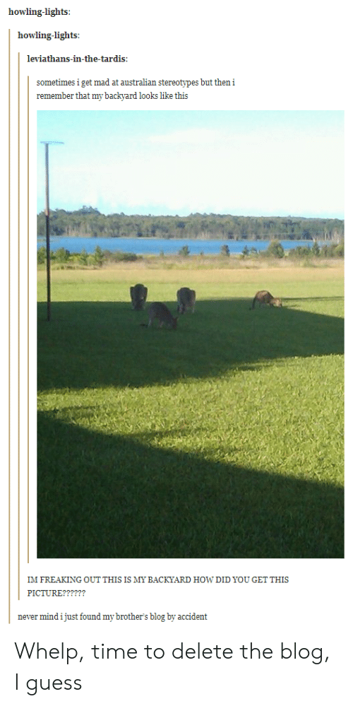 whelp: howling-lights  howling-lights:  leviathans-in-the-tardis  sometimes i get mad at australian stereotypes but then i  remember that my backyard looks like this  IM FREAKING OUT THIS IS MY BACKYARD HOW DID YOU GET THIS  never mind i just found my brother's blog by accident Whelp, time to delete the blog, I guess
