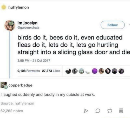 sliding: huffylemorn  im jocelyn  Follow  @guldeuxchats  birds do it, bees do it, even educated  fleas do it, lets do it, lets go hurtling  straight into a sliding glass door and die  3:55 PM 21 Oct 2017  ●  9,108 Retweets 27,373 Likes  ︶  copperbadge  I laughed suddenly and loudly in my cubicle at work.  Source: huffylemon  62,262 notes
