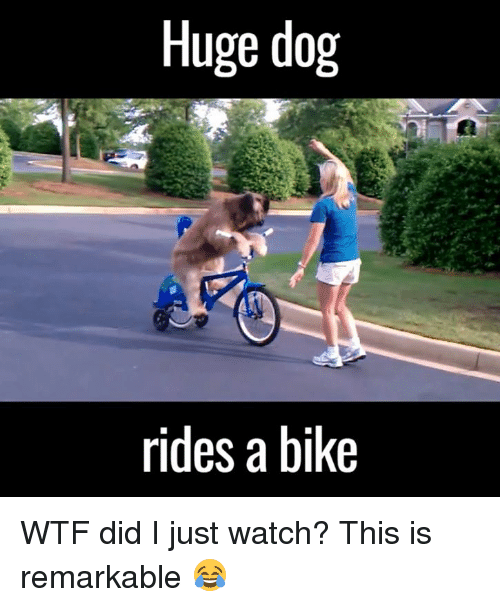 Dank, Dogs, and Wtf: Huge dog  rides a bike WTF did I just watch? This is remarkable 😂