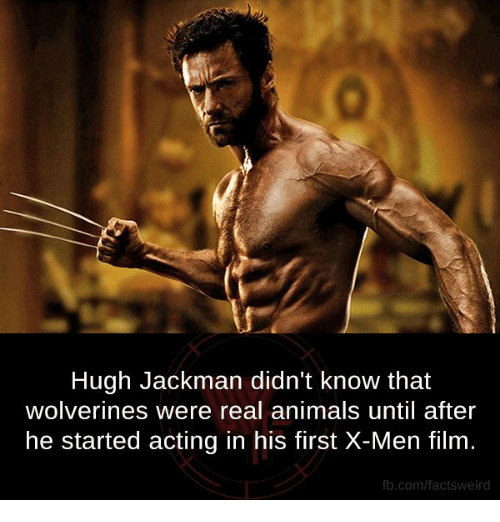 X-Men (Film): Hugh Jackman didn't know that  wolverines were real animals until after  he started acting in his first X-Men film  fb.com/facts Weird