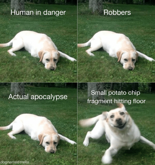 Chip: Human in danger  Robbers  Small potato chip  Actual apocalypse  fragment hitting floor  dognamedstella