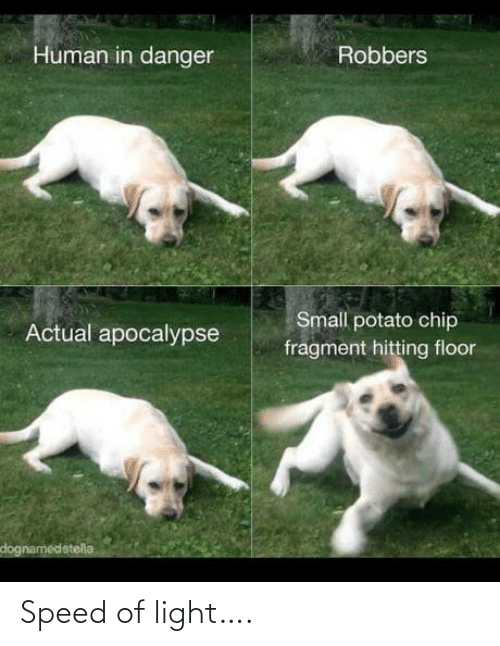 hitting: Human in danger  Robbers  Small potato chip  Actual apocalypse  fragment hitting floor  dognamedstella Speed of light….